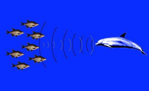 фізіологічні адаптації у тварин