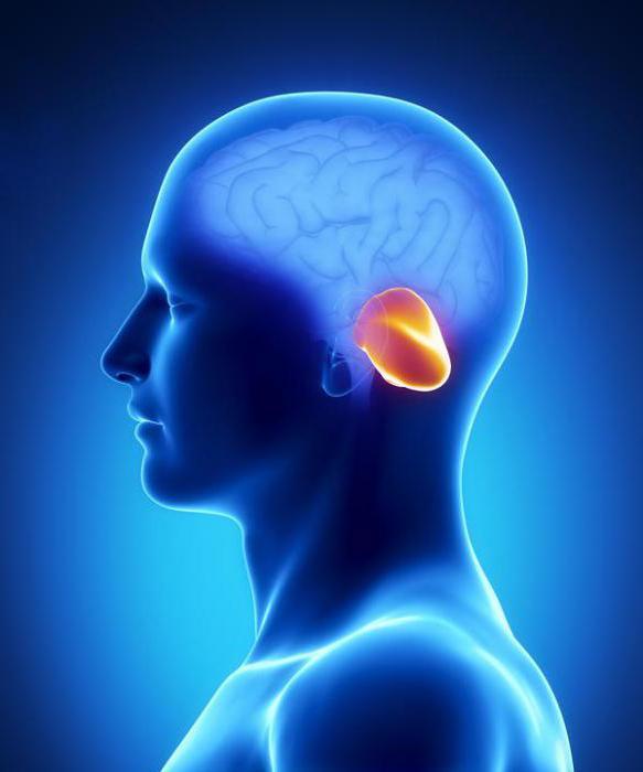 функції середнього мозку і мозочка