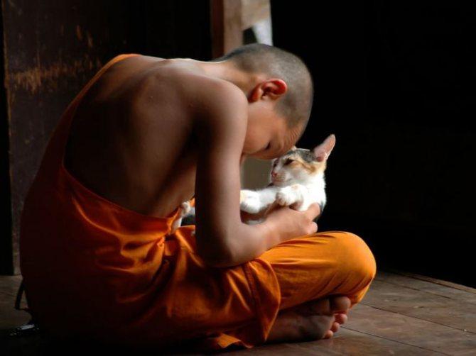 Медитація милосердя має величезну силу,