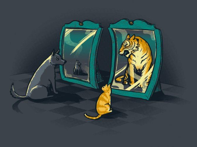 собака і кіт в дзеркалах